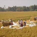 INDIA- Kuttanad Below Sea Level Farming System