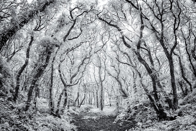 The infrared path at Unity Woods Cornwall UK