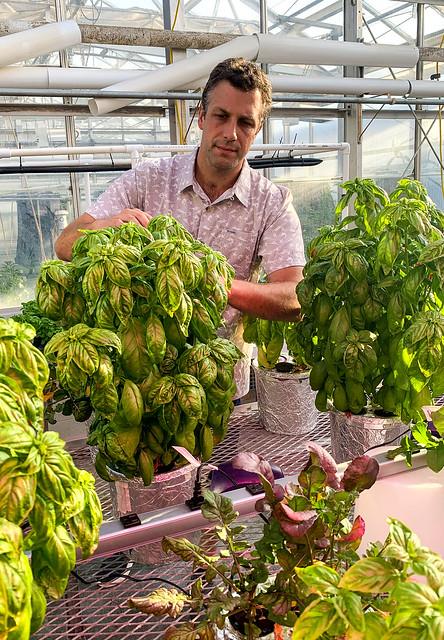 Dickson photo hydroponics02