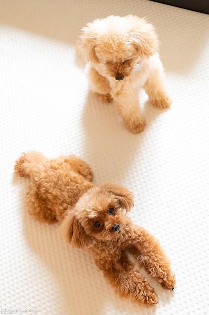 My sweet dogs
