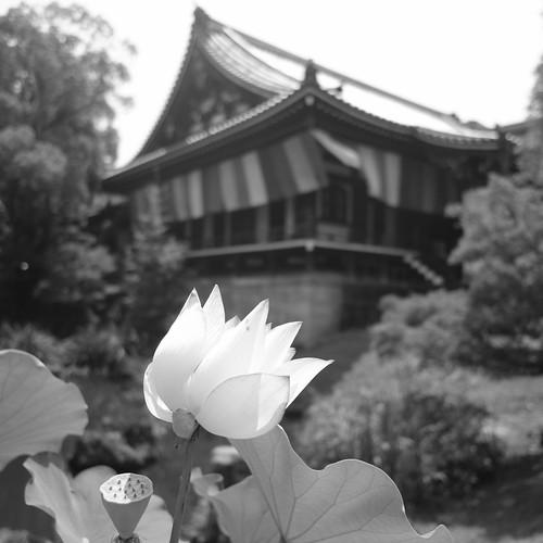 06-08-2020 Kyoto vol02 (66)
