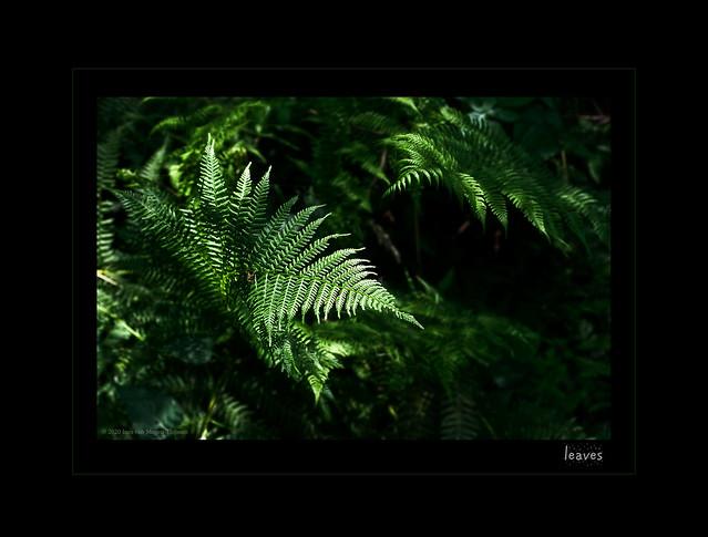 Dia-box  -  leaves IV