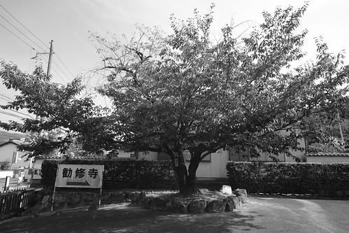 06-08-2020 Kyoto vol02 (139)