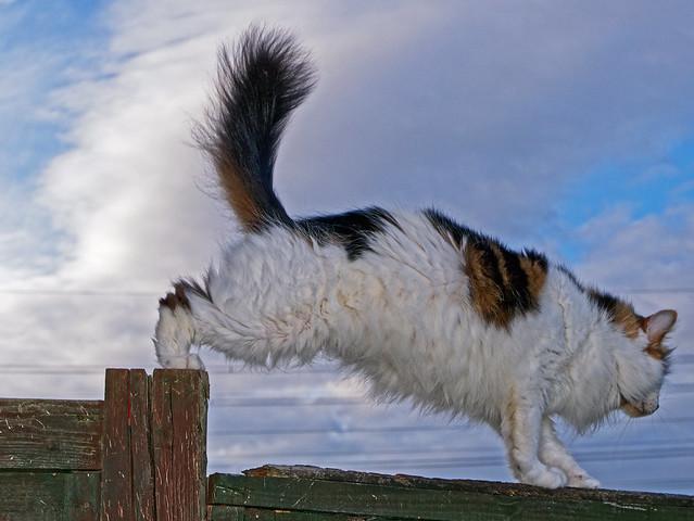 Balancing Act - Tilly the 3-legged Cat (Panasonic LX100)