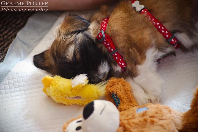 Kiko Sleeping - IMG_4379 - Edited