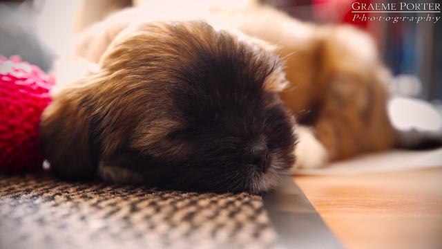 Kiko Sleeping - IMG_4386 - Edited