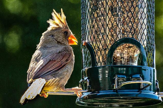 Backyard Bird Bistro
