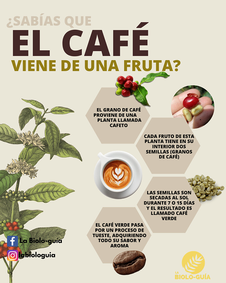 Granos De Café Lo Que Debes Conocer Si Eres Un Amante Del Café Sabora Cafés Tostados No Día