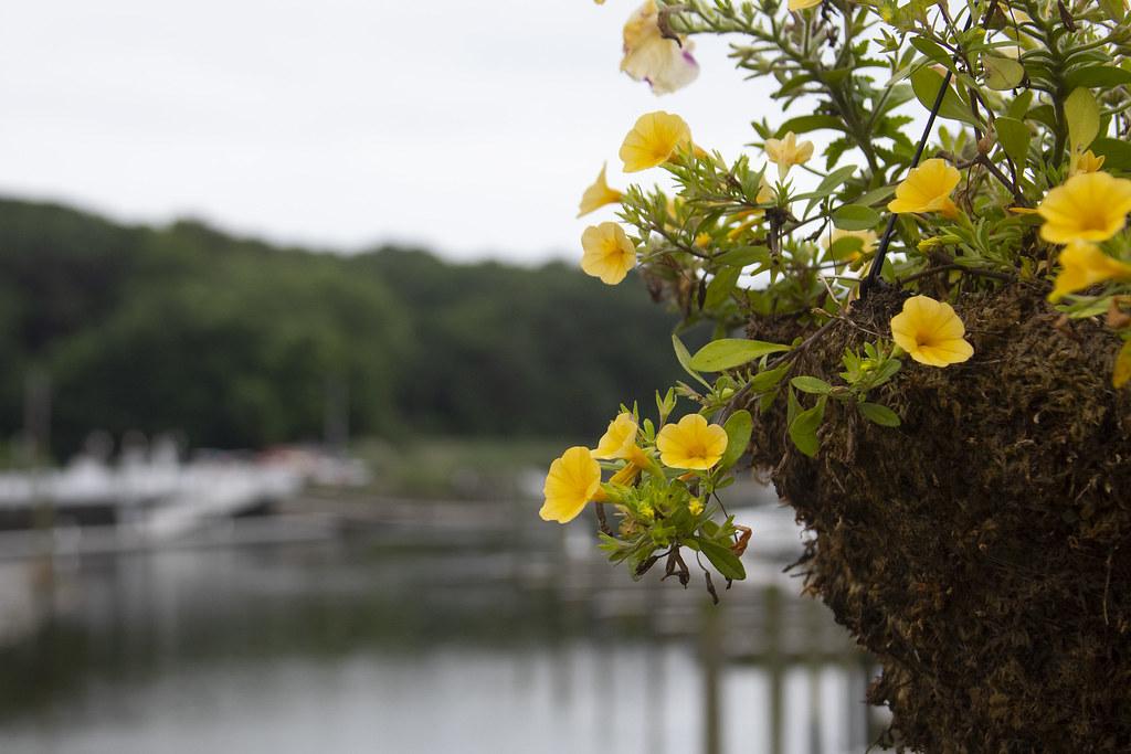 Harbor Flowers