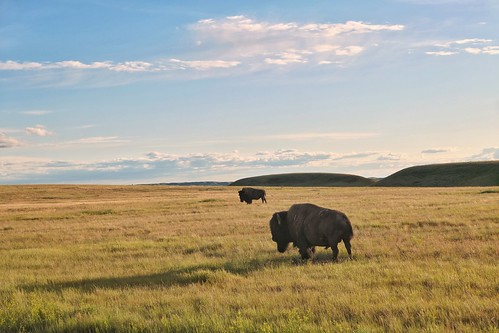 Prairies' locals | Habitants des Prairies | by VinceTraveller