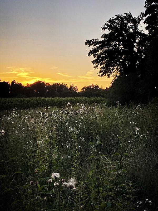 August in Stein