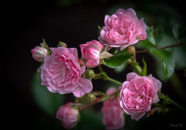 Pretty Pink One