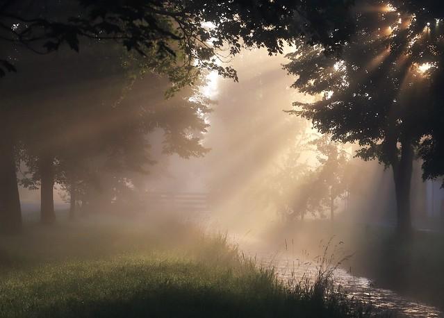 Fog is in the Air (morgendliche Stimmung an der Schönach)