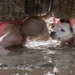 foto: Hard Dog Race