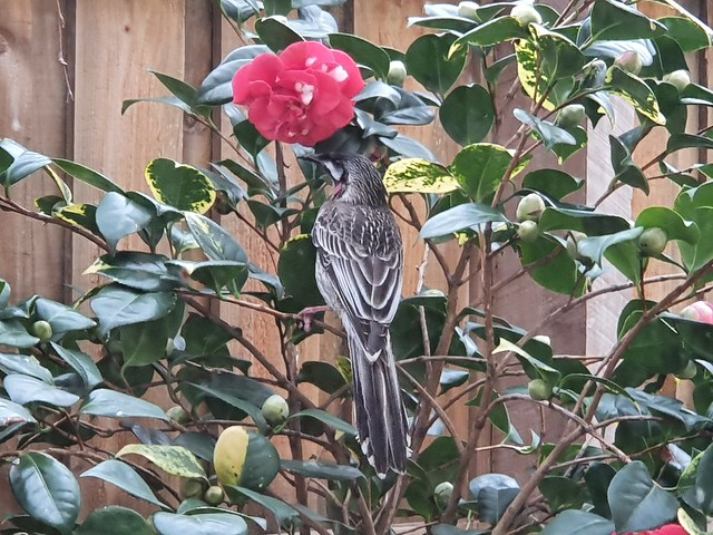 Birding in isolation; home and nearby