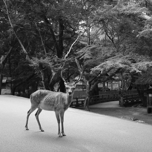 07-08-2020 Nara vol01 (9)