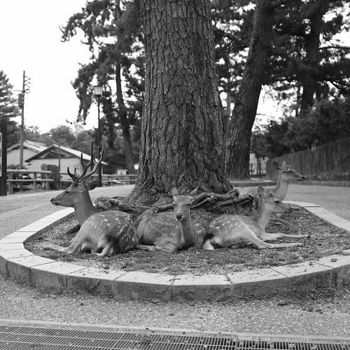 07-08-2020 Nara vol01 (5)