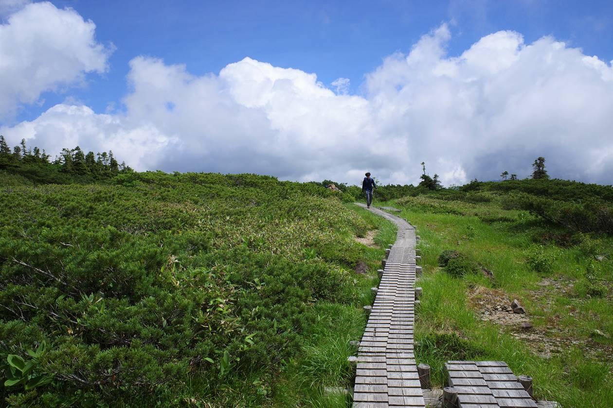 薬師岳の湿原と木道路
