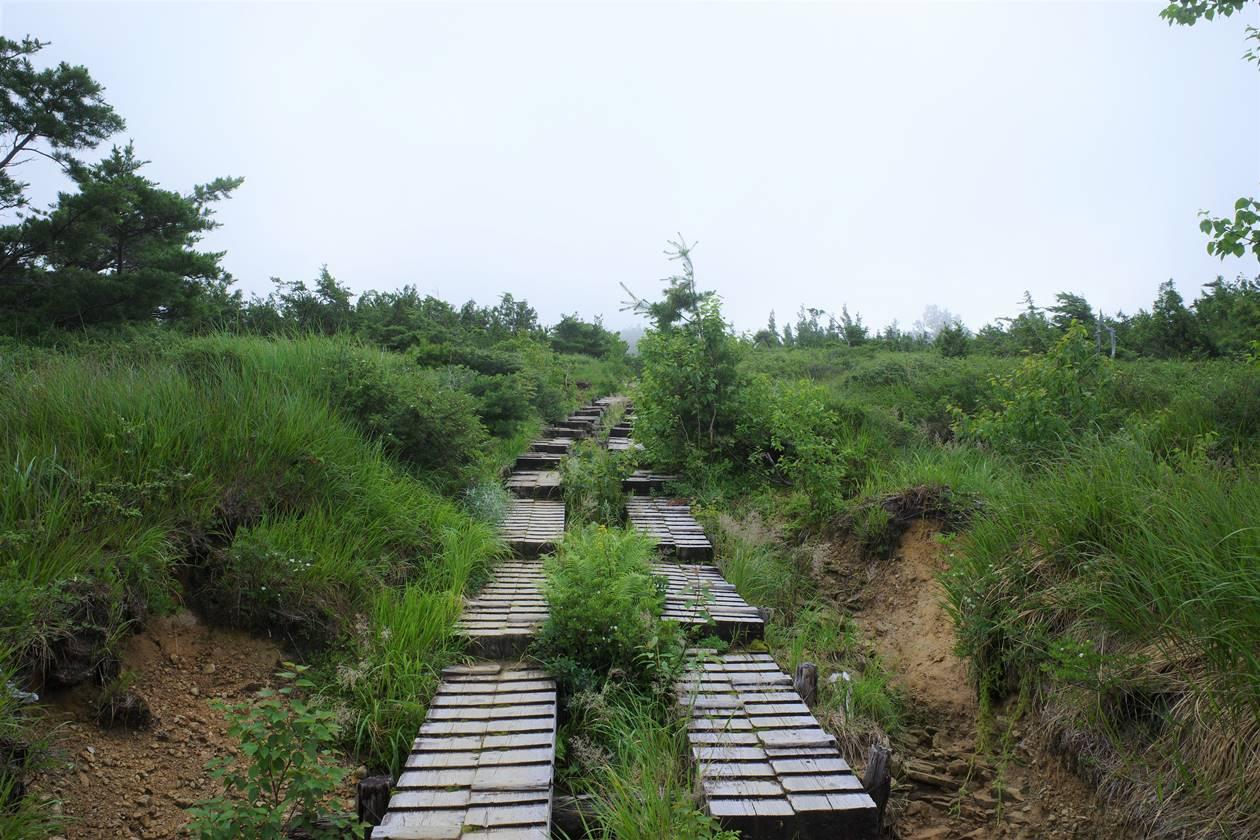 折立登山道の木道