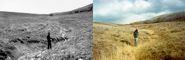 Improving range conditions through sustainable grazing, 1950 and 2000