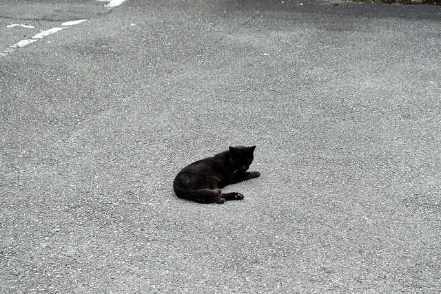 Today's Cat@2020ー08ー07