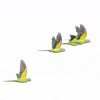 Surrey parakeets