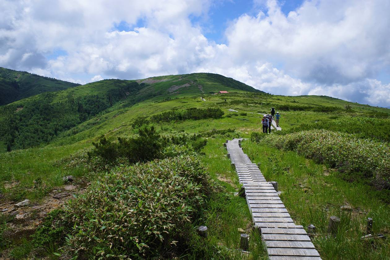 太郎平の湿原と木道路
