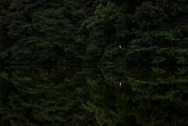 湖畔の情景 #2ーLakeside scene #2