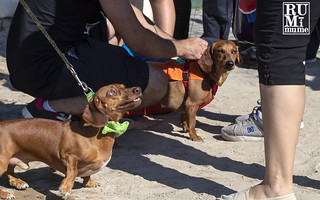 2019 Weiner Dog Races