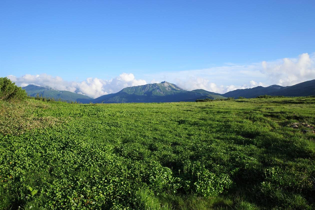 薬師岳の湿原から眺める黒部五郎岳
