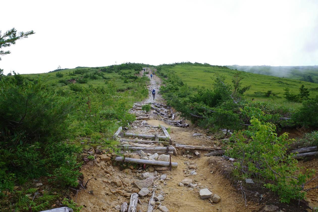 折立登山道の湿原と遊歩道
