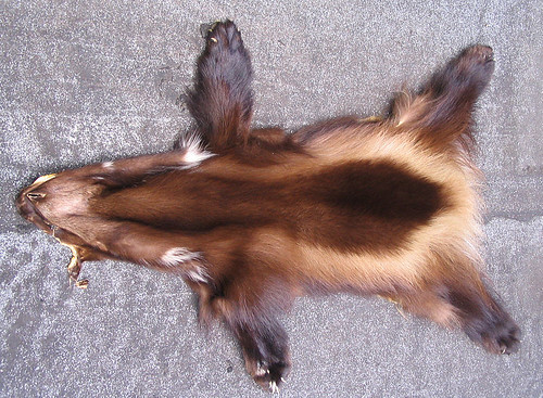 Wolverine-pelt