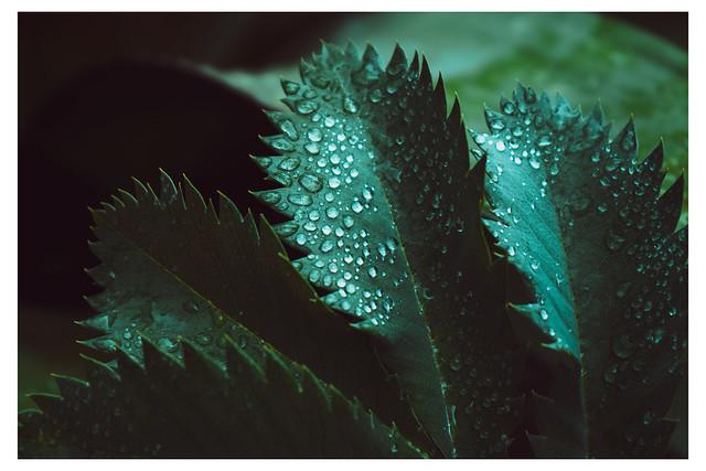 Droplets in the Dark - Chanticleer - Wayne PA_Web 1-E_Scaled