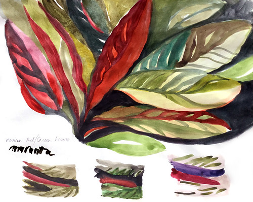 Watercolour painting in a sketchbook of Maranta, a member of the Maranta or Prayer Plant family Marantaceae