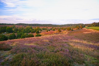 Heathland in the evening | August 2, 2020 | Lower Saxony - Germany