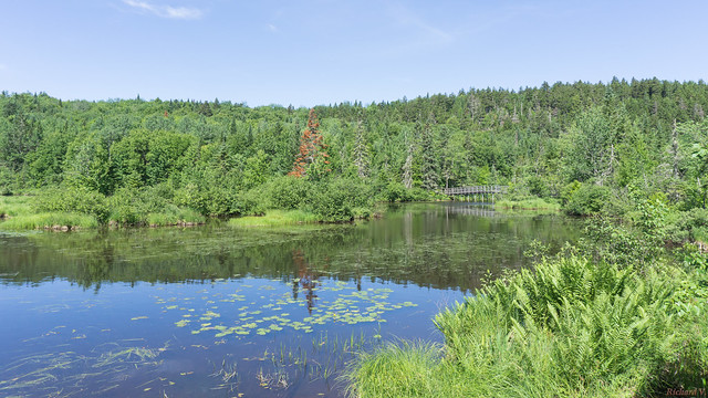 Marais du Nord, Nord du Lac Saint-Charles, PQ, Canada - 4668