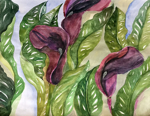 Watercolour painting in a sketch book of purple Calla lilies