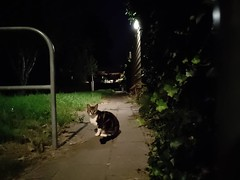 #cats #CatsOfInstagram #nightshot