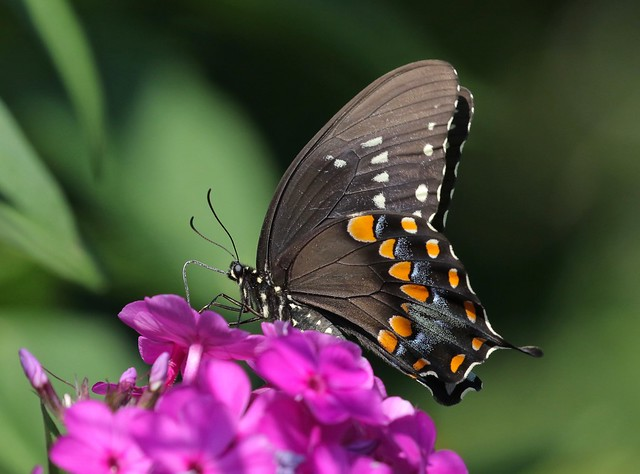 Pollinator With Flair