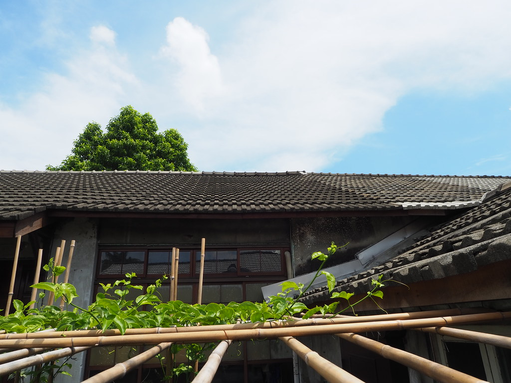 鳳山黃埔新村(49)