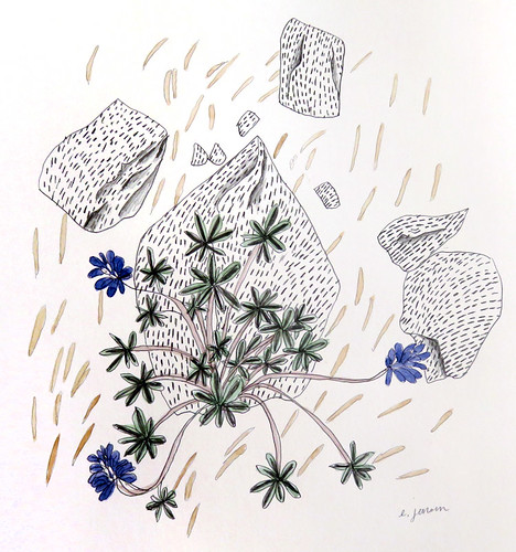 Pencil drawing with watercolour painting of Lupins up on a Manning Park hike up the Three Brothers