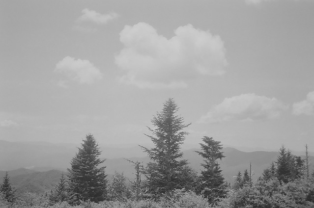 Trees and clouds on Andrews Bald.