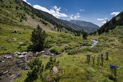 Rialb Valley, Pyrenees, Andorra