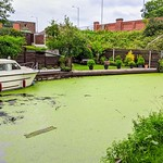 Green covered canal at Preston