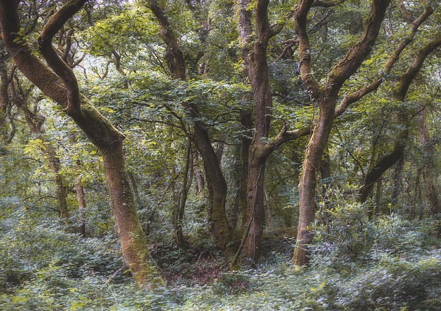 Multiple trees in Unity Woods