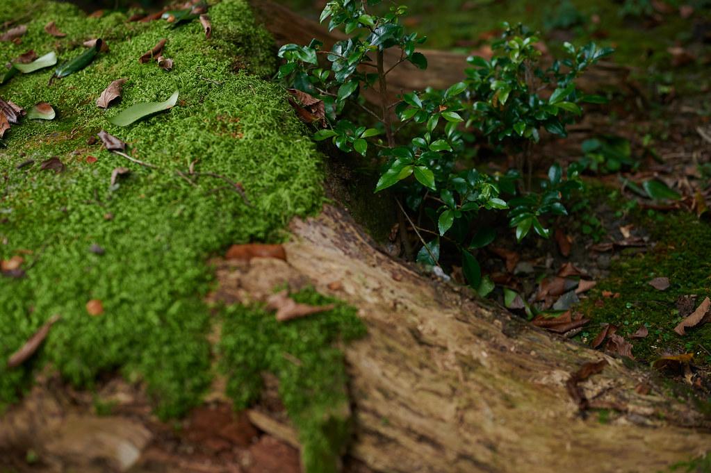 Kyoto Green