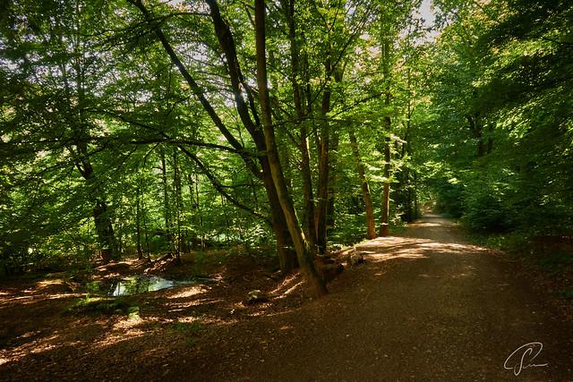Der Weg zum Niedernhausener Waldsee