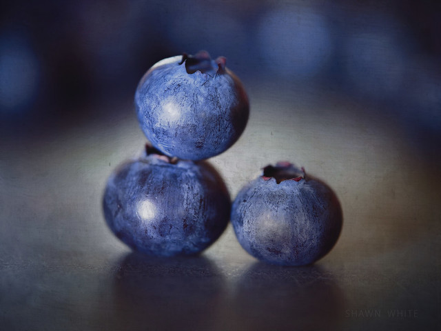 Blueberry Circus