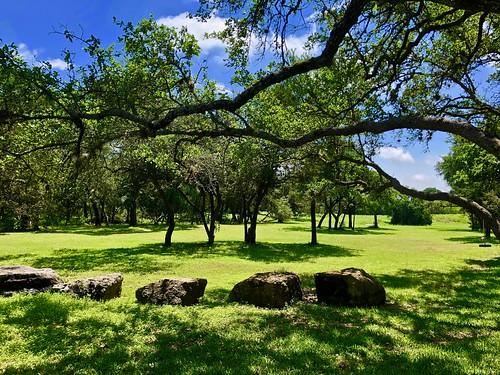 austin texas greenbelt springtime live oak