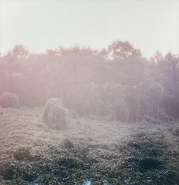 Pale Kudzu Morning